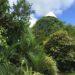 Arquitectura techos verdes Costa Rica